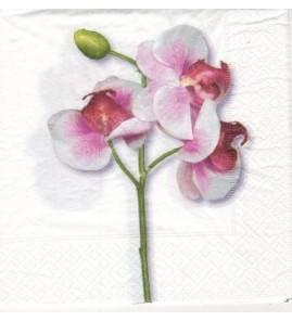 Serviette «classic orchid white»